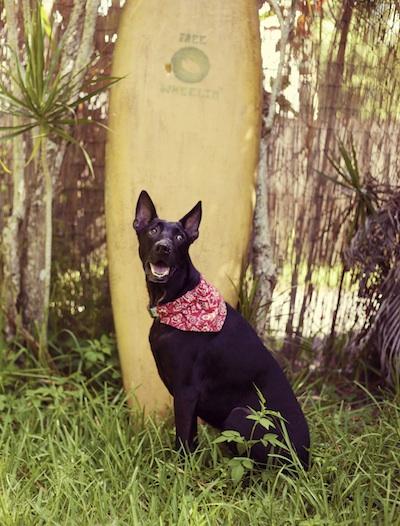beachdaydoggie1